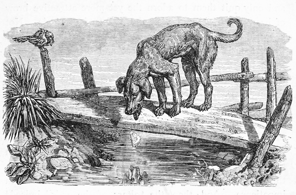 The Dog and The Shadow - Fables of Aesop
