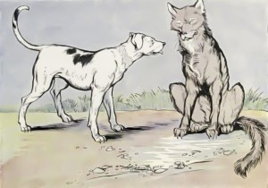 Wolf and House Dog