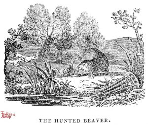 Whittingham - Hunted Beaver