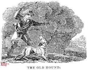 Whittingham - Old Hound