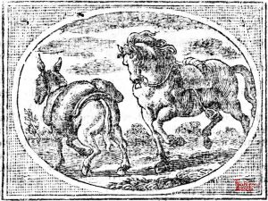 Croxall - Horse and Ass