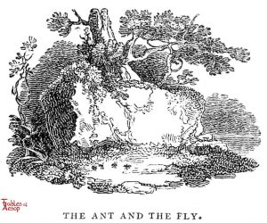 Whittingham - Ant and Fly