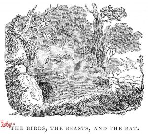 Whittingham - Birds, Beasts and Bat