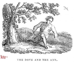 Whittingham - Dove and Ant
