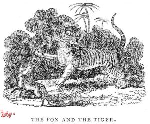 Whittingham - Fox and Tiger