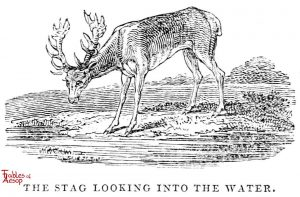 Whittingham - Stag Looking in Pool