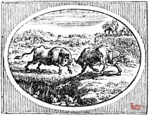 Croxall - Frogs and Fighting Bulls