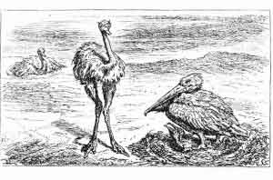 Ostrich and Pelican