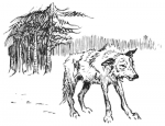 Dog and Wolf C1