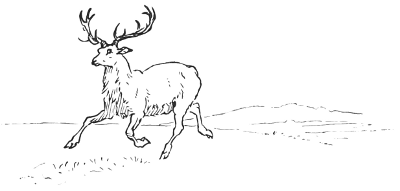 Stag Water C4