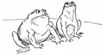 Frogs and Bull C1