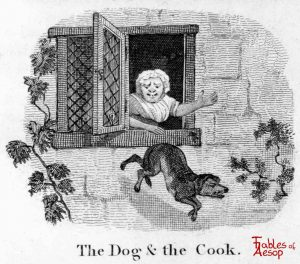 Taylor - Dog and Cook 0035