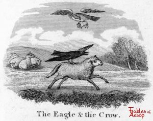 Taylor - Eagle and Crow 0041