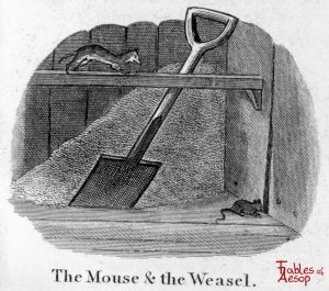 Taylor - Mouse and Weasel 0041