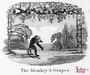 Taylor - Monkey and Grapes 0045