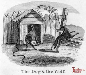 Taylor - Dog and Wolf 0049