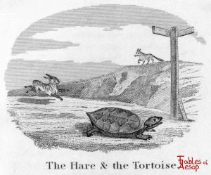 Taylor - Hare and Tortoise 0089