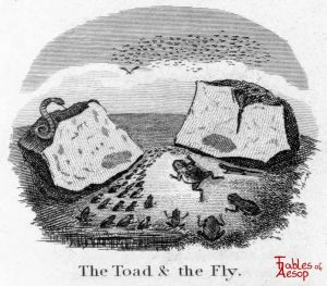 Taylor - Toad and Fly 0099
