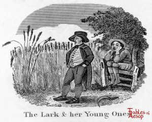 Taylor - Lark and Young Ones 0105