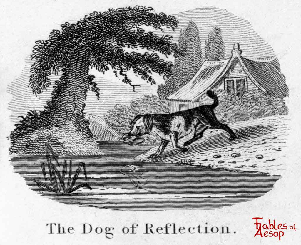 the dog and his reflection pdf