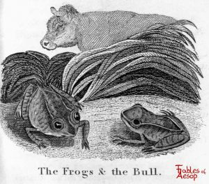 Taylor - Frogs and Bull 0131