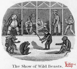 Taylor - Show of Wild Beasts 0187