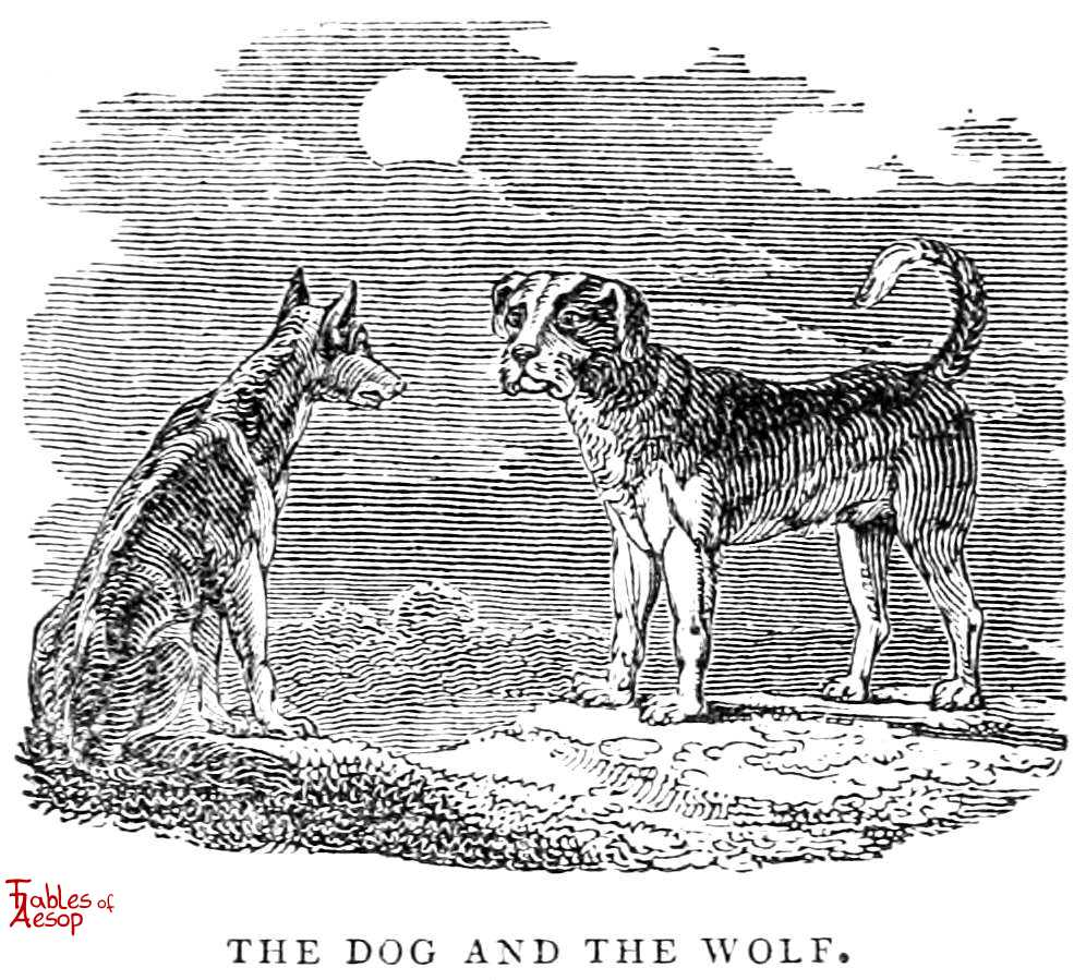 The Dog and The Wolf - Fables of Aesop