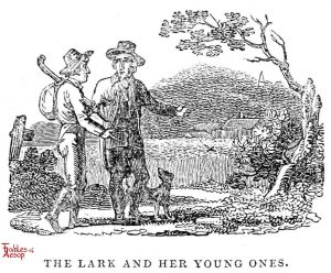 Whittingham - Lark and Young