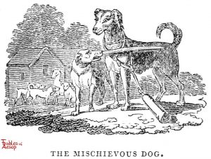 Whittingham - Michevious Dog