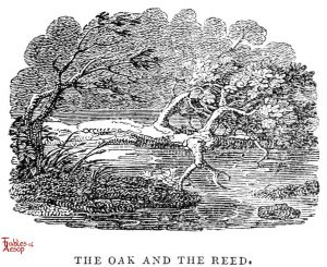 Whittingham - Oak Tree and Reed